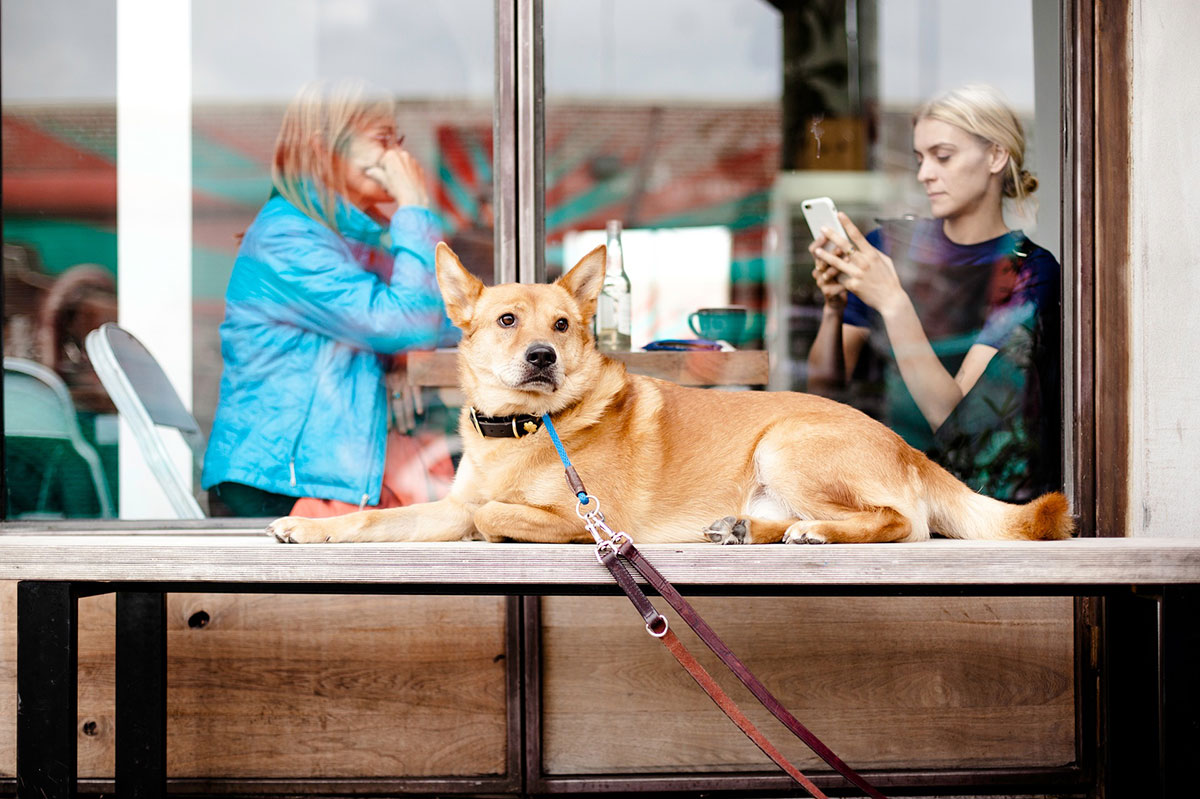 Dog friendly restaurants, cafes, and bars in Shanghai.