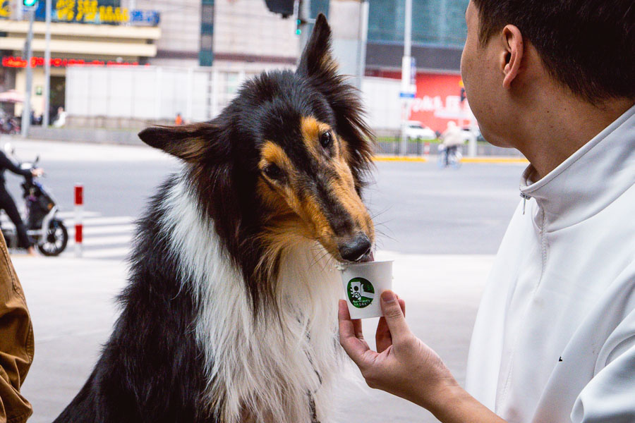 Dog-friendly Starbucks in Shanghai